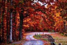Herbst | Autumn / Von Pumpkin Spice Latte bis hin zu Füchsen: hier findest Du die besten Rezepte, die schönsten Fotos und ganz viel Inspiration für die dritte Jahreszeit!