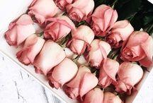 Flora / Flora. Beautiful blooms, floral displays, shrubs, plants, trees and other botanical arrangements.