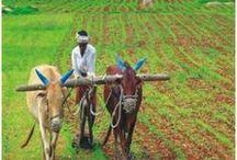 Agriculture Market