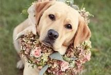 Dogs in Weddings / Whether is a ring bearer, flower girl, best man, or bride's maid...dogs are taking their rightful place in wedding ceremonies! #dogsinweddings / by TripsWithPets.com