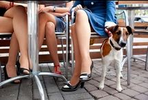 Pet Friendly Restaurants / Many restaurants with outdoor seating allow you to dine with your pet. #petfriendlyrestaurants / by TripsWithPets.com