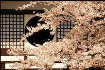 Sakura / La bella flor del cerezo