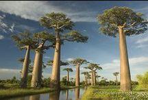Beautiful Madagascar!