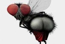 Insectitos / La primavera llega cuando ves la primera mariposa...