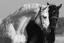 Caballos - Horses