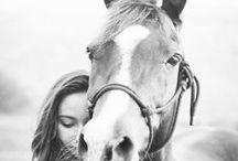 konie / I love HORSE