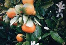 Plant Life / Lush and beautiful plant life.