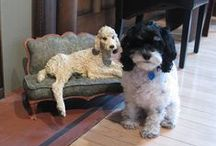 EMMA'S PICKS / The Mayberry Fine Art canine mascot, Emma, shares her favourite art and artists