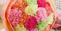 carnations / flowers