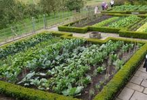 Moestuinen / Vegetable gardens | Garden Job / Some good ideas and attractive inspiration for your own vegetable garden.