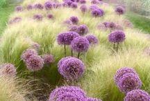 Mooie plant combinaties / The best plant combinations | Garden Job