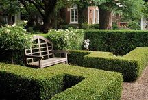 Boxwood / Buxus | Garden Job / Ideas and inspiration with boxwood hedges and special shapes.