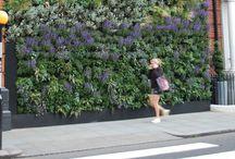 Vertical garden / Verticalen tuinen | Garden Job / Some inspiration and ideas about vertical gardens on walls.