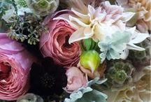 Flowers / All of my favorite flowers