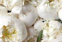 Les jolies fleurs...