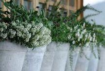 Green fingures / Gardening.