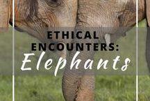 Ethical Encounters: Elephants