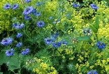 Garden / tuin