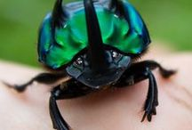 INSPIRATION: Beetle Boy Books / Things I look at when writing about beetles