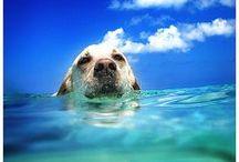 ✽ Dog ✽