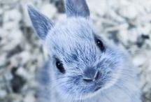 ✽ Bunny ✽