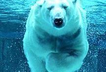 ✽ Bear ✽