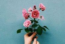 ✽ Flower Bouquets ✽