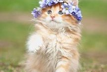 ✽ Cats & Flowers ✽