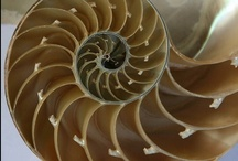 Biomimicry / Looking to nature for answers to engineering or life sciences problems / by ManufacturingStories