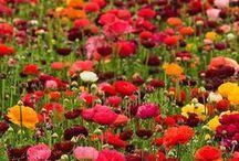 Flowers / by Susie Jensen