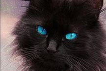 Kitty cat / I adore cats. I used to have 3-4 at home plus however many strays..