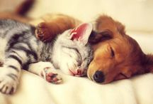 Cute Animals / A board full of cuteness!. I bet this will make you smile, I couldn't stop smiling while creating this