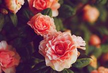 Floral / 'Ello petal.