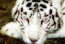 ANIMALS / Animali belli e divertenti da tutto il mondo.