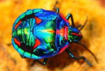 BEAUTIFUL BUGS & INSECTS