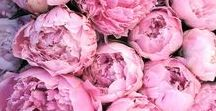 #DH Pretty in Pink / Super vrouwelijk en ook nog eens de spring/summer kleur van 2018, wat willen we nog meer? Roze kun je stoer of juist heel schattig combineren. In details van top tot teen of juist één opvallend accessoire: je tas! In de collectie van verschillende topmerken is de kleur roze ontzettend populair.