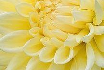 #DH Yellow Sunshine / Zet jij liever de eerste stap richting de zomer met een fel en opvallend kleurtje? Dan is de trendkleur geel een perfecte keus. Een gele tas zorgt voor een zonnige uitstraling en geeft je outfit een opvallende twist. Daarbij staat de kleur voor confidence en creativity. Geel combineer je makkelijk met andere felle kleuren of juist met zwart, wit en blauw. Of draag de outfit in dezelfde kleur als je tas. Zo breng je rust in je look en gaat alle aandacht naar de hippe kleur.