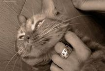 FOREVER COLLECTION gatto