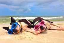 Pets on Vacation / Whimsical and hilarious - these pins of animals at the beach just make me smile!