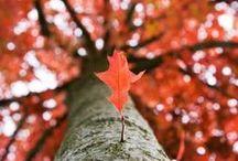 I Love Fall / by Kayla Martin