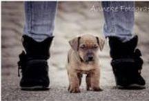Animal / Hond, kat, paarden, alles kan !