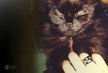 SHINE COLLECTION gatto