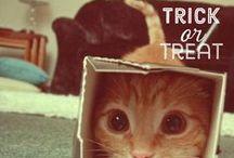Pet Halloween / #Pet Halloween: I nostri amici #cuccioli nel mondo magico del mistero.