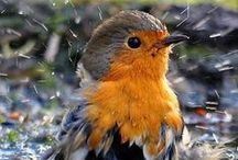 Madarak/Birds