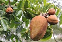 Central America: Native fruits