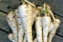 Europe: Vegetables / Vegetables that have been available in Europe since at least the Middle Ages, including: Asparagus, Brussel sprouts, Artichokes, Carrots, Cabbage, Turnips, Beetroot, Celery, Onions, Parsnips, Lettuce, Spinach, Swiss Chard, Leeks.