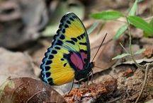 Africa: Bees & butterflies / bees, bugs, insects, moths, caterpillars