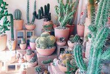 Cactus. / Favorite Plant