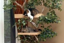 Cat Castles / Check out these awesome cat trees! / by Stow Kent Animal Hospital