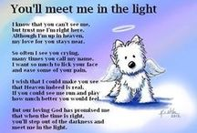 puppy love / This board is dedicated to my westie, Maxie, born 10/31/98, crossed the rainbow bridge 8/31/13. / by Shari Hudson